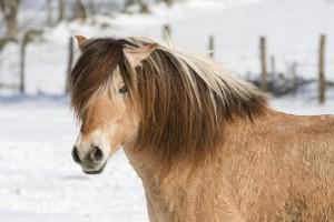 reiterhof decke pferd draussen winter schnee tier